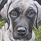 English Mastiff Puppy by Wendy Crouch