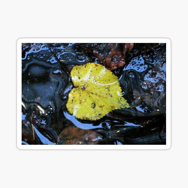 The Autumn Leaf Sticker