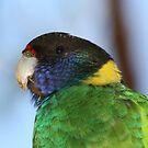 Parrot by Stephen Horton