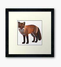 Fox Illustration Framed Print