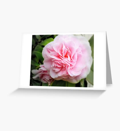 Pink Camelia - Garden Beauty Greeting Card