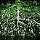 Exposed roots by Phil  Hatcher