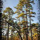 New Jersey Pinelands by busidophoto