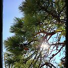 Pine Tree HDR by busidophoto