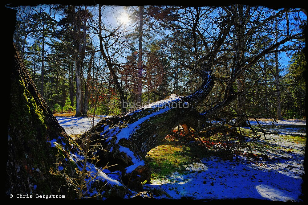 Fallen Tree HDR by busidophoto