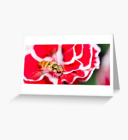 Hover fly on carnation Greeting Card