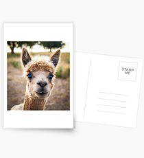 Meet Ollie Postcards