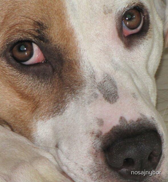 Roxie eyes by nosajnybor