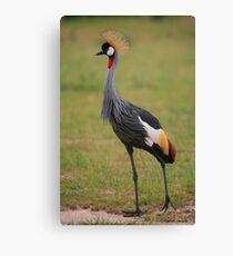Grey Crowned Crane Leinwanddruck