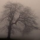Foggy Maple by pmreed