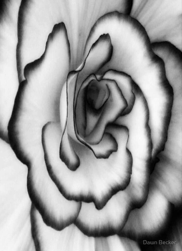 Beauty can still be found even without color!!! ©  by Dawn Becker