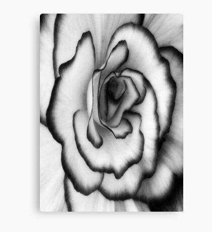 Beauty can still be found even without color!!! ©  Canvas Print