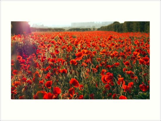 Poppies by Clara Novo