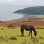 Exmoor Pony by WatscapePhoto