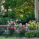 Rose Garden in Newburyport by Monica M. Scanlan