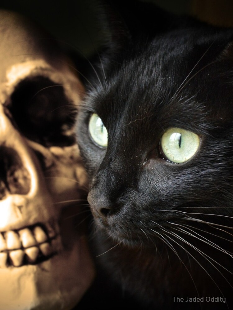 Super Cute Spooky Cat With Human skull by mydragonzeatyou