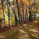 Autumn Shady Lane by NatureGreeting Cards ©ccwri