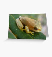 cute little froglet Greeting Card