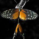 Butterflies in Love by Gary Pope