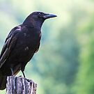 Cades Cove Crow by EthanQuin