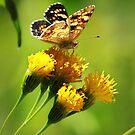 Butterfly 1 by KatsEyePhoto