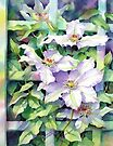 White clematis on a trellis by Ann Mortimer