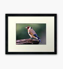 Goldfinch Framed Print