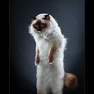« CATS - ARCHI (1) ©alexisreynaud.com » par Alexis Reynaud