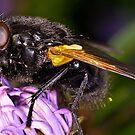 Bubble Fly by Gareth Jones