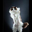 « CATS - B-MAX (2) ©alexisreynaud.com » par Alexis Reynaud