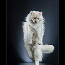 « CATS - CACAHUETE ©alexisreynaud.com » par Alexis Reynaud