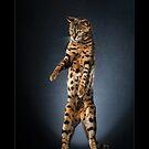 « CATS - CHOUKI ©alexisreynaud.com » par Alexis Reynaud