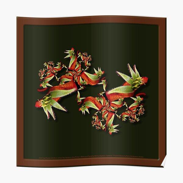 D1G1TAL-M00DZ ~ FLORAL ~ FRACTALS ~ Red Kangaroo Paw OT-Fractal by tasmanianartist 130619 Poster