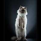« CATS - COTON (2) ©alexisreynaud.com » par Alexis Reynaud