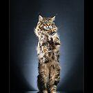 « CATS - JUDY ©alexisreynaud.com » par Alexis Reynaud