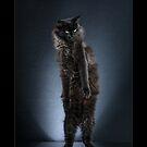 « CATS - LOONY ©alexisreynaud.com » par Alexis Reynaud