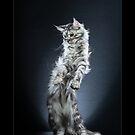 « CATS - NARNIA ©alexisreynaud.com » par Alexis Reynaud