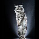 « CATS - NEPTUNE ©alexisreynaud.com » par Alexis Reynaud
