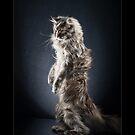 « CATS - NEVA (2) ©alexisreynaud.com » par Alexis Reynaud