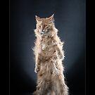 « CATS - NORSE ©alexisreynaud.com » par Alexis Reynaud