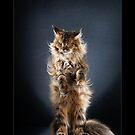 « CATS - NYX ©alexisreynaud.com » par Alexis Reynaud