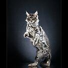 « CATS - OBELIX (1) ©alexisreynaud.com » par Alexis Reynaud