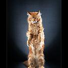 « CATS - ODYSSEUS ©alexisreynaud.com » par Alexis Reynaud