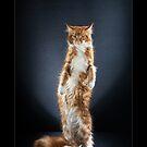 « CATS - OPRAH ©alexisreynaud.com » par Alexis Reynaud