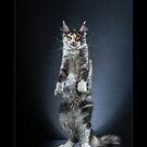 « CATS - OYANA ©alexisreynaud.com » par Alexis Reynaud
