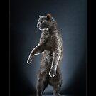 « CATS - PETZI (3) ©alexisreynaud.com » par Alexis Reynaud