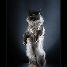 « CATS - TANGO (2) ©alexisreynaud.com » par Alexis Reynaud