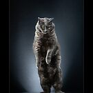 « CATS - THAIS ©alexisreynaud.com » par Alexis Reynaud