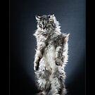 « CATS - TIGRA ©alexisreynaud.com » par Alexis Reynaud