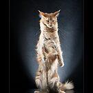 « CATS - VIRGINIA ©alexisreynaud.com » par Alexis Reynaud